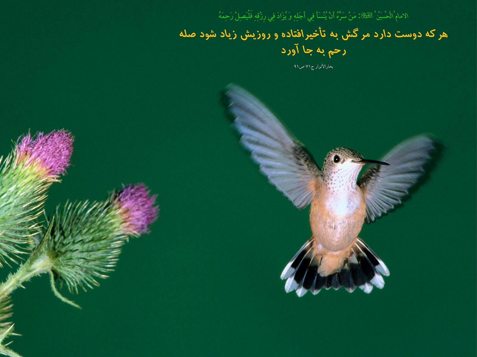 http://mhkh1972.gohardasht.com/uploaded/_170D1441-699A-4106-BF7F-580CB6FC6C04_.jpg