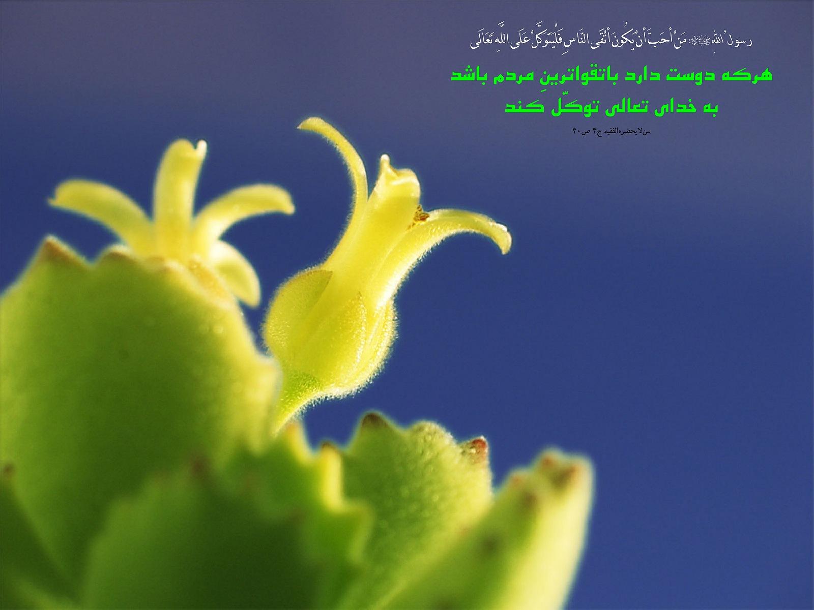 http://mhkh1972.gohardasht.com/uploaded/_81A5BABD-8FEF-46A7-80B9-89685F477754_.jpg