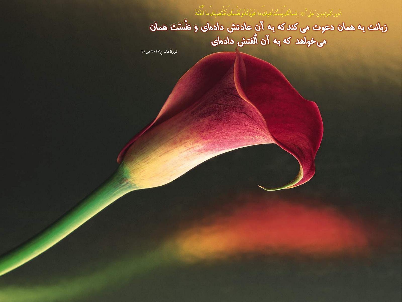 http://mhkh1972.gohardasht.com/uploaded/_B30D7B16-7C4F-494C-8BF7-9FFC2E2DF68E_.jpg